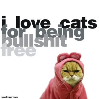 """I love cats for being bullshit free."" Amen. (And thank you, @frijolita, for finding a cat-anything I hadn't seen!!)"