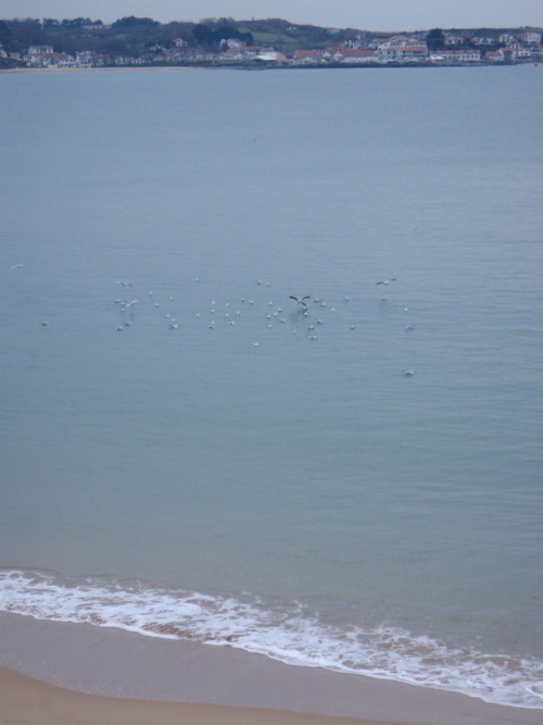 Birds on the bay in San Juan De Luz. Fun Fact: Shortly after I took this photo, I became engaged!