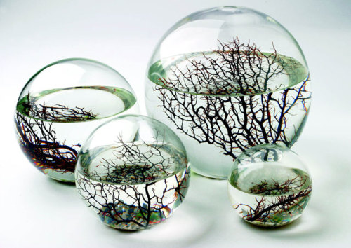 "iheartgeek:  ""Inside these sealed glass balls live shrimp, algae, and bacteria, all swimming around in filtered seawater. Put it somewhere with some light, and this little ecosystem will chug along happily for years, no feeding or cleaning necessary, totally oblivious to the fact that the rest of the world exists outside."" Let me love them. Please let me love them. Q___Q"