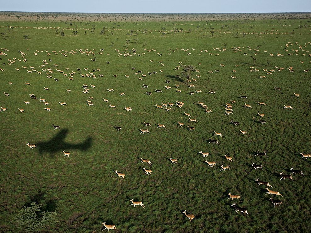 Thousands of white-eared kob race in the shadow of a Wildlife Conservation Society survey plane in a park east of Bor. The seasonal migration of animals in southern Sudan is a spectacle to rival the flow of animals across Tanzania's Serengeti Plain. Photograph by George Steinmetz