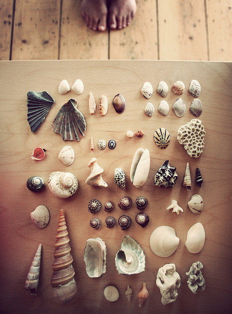 artpixie:  shells of the world (by Kat Heyes)