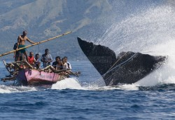 Traditional Whale Hunters, Lamalera | Flores - Indonesia By: Ardiles Rante