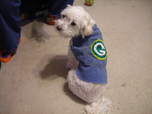My daughter embroidered a Green Bay coat for our puppy Dusty, isn't she adorable !