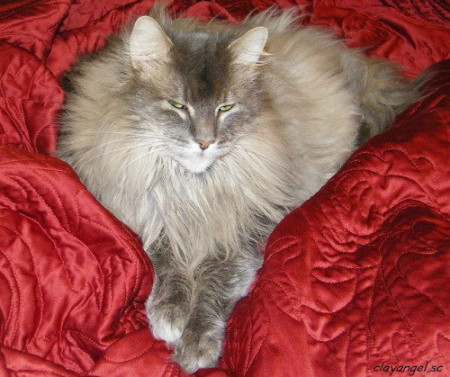 He looks like a pissed-off heart. Fat cat tip: sexy boudoir photos of yourself fat cats are a great last-minute gift idea.   [via mistermumbles via fuckyeahfatcat]