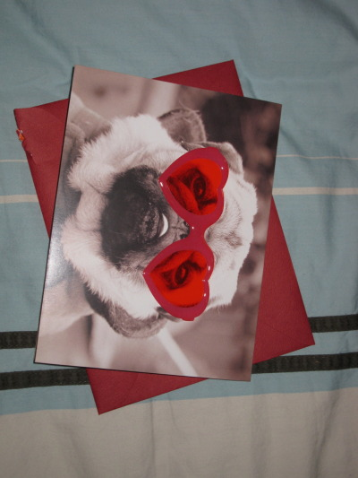 My Valentine's Day card.  A real pug would have been good, but I'll settle for one on a card. It's cuter when it's rotated counter-clockwise.  WTF, Tumblr?