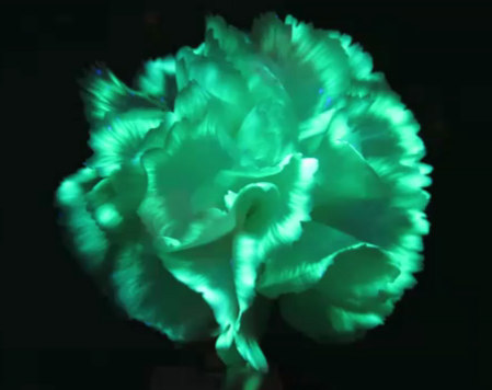 Glow in the dark flower,