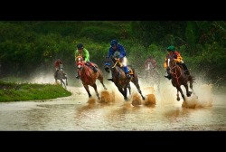 """Pacu Kudo"" - Indonesian Traditional Horse Race, Bukittinggi 