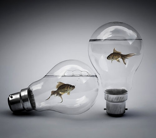 dashperiod:  Question: How can the fishies leave the light bullbs? hmmm….