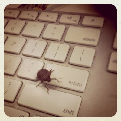 Not another #stinkbug! I guess  (Taken with instagram)