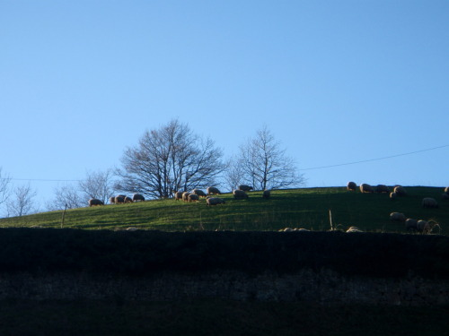 Sheep on the hill.