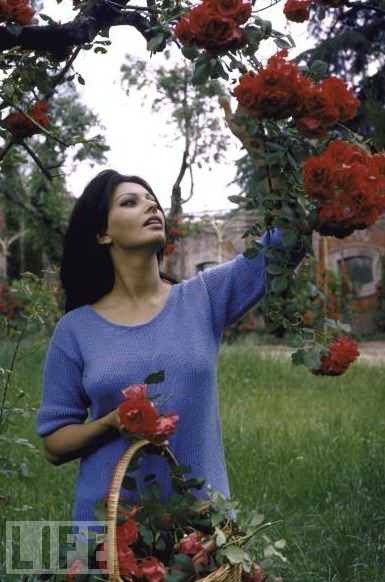 "Sophia Loren. ""A house is like a person, you must be together for awhile to be comfortable,"" Loren said about the villa she called her ""first real home.""  The beautiful Sophia Loren at her Italian Villa"