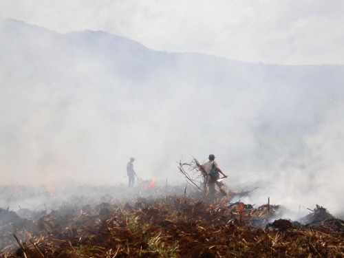 Some haciendas still burn the cane fields after harvest.