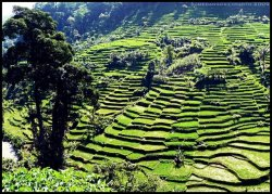 Beautiful Paddy Fields Scenery at Cadas Pangeran, Sumedang | West Java - Indonesia Courtesy: Sumedang Photo Daily