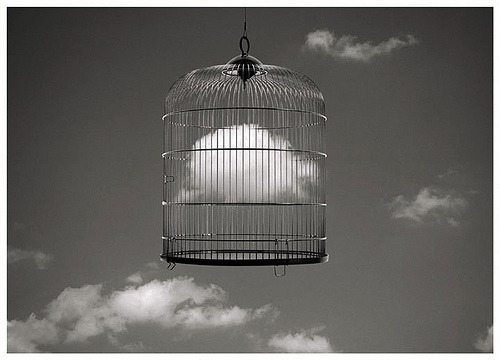 Imagination is a beast that has to be put in a cage. ~ Timothy Spall