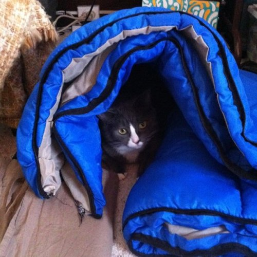 Reuben returns to his sleeping bag cave (Taken with instagram)