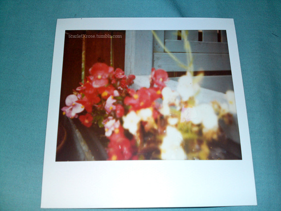 Test: to see if expired film still works.