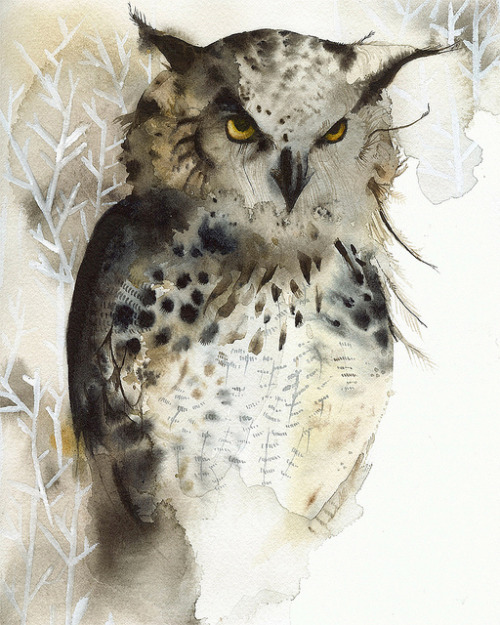 aubirdyart:  Amber Alexander-Great Horned Owl Watercolor (by Amber Alexander)
