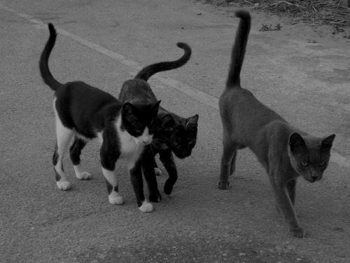 Man, that's a cat gang if I ever saw one. You know they're up to no good.