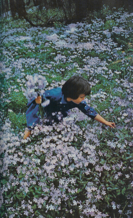 A girl in a field of meadow phlox, Washington, D.C., 1960