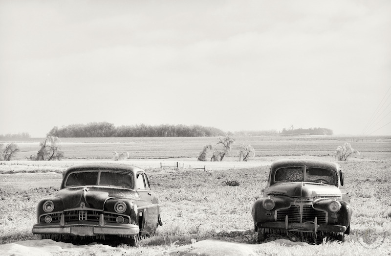 Out to pasture, South Dakota