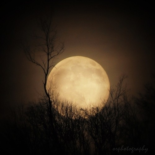 dreamsinthyme:  Good Night Moon and Good Night YOU