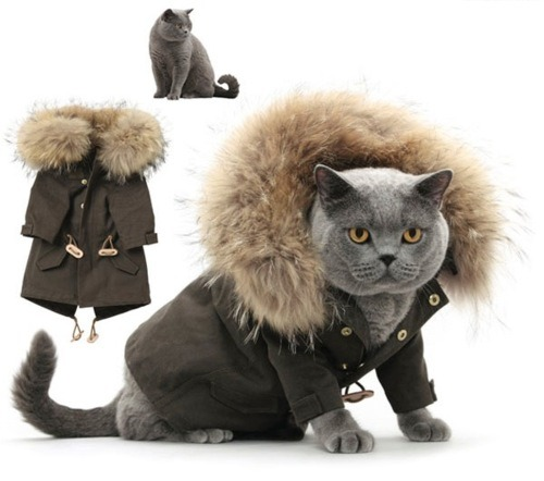 take of that coat cat. you don't need a coat you have plenty of fur.