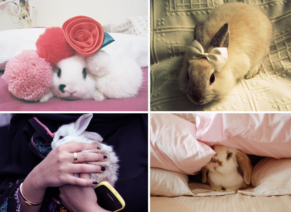 Trey sent me cute pictures of bunnies (100 of them!). Ahh, so cute! My month-long no shopping went great! (Except for that one day I  visited a thrift store and a wee little sale at Forever 21 earlier this  week… but those don't even count…) Today is the official day it is over.  I had to say no a lot of times, but ultimately it was a good thing  because in the last month I have gone from wearing a heavy coat to  tank-tops. FYI, the best sweater sales are happening right now, if you  don't have any better stock up for the next year! Today on the fun radar I have plans to spend time with my friends! Accompanied by sushi. I was reading a sushi book last night, which you should never do it you don't have any sushi with you.  Next week I plan to do more illustrations, but for now let's all enjoy the weekend :)