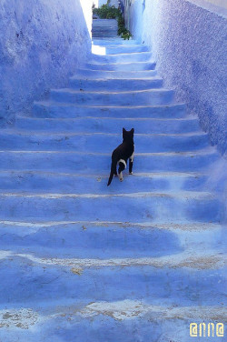 Stair Cat - Chefchauen, Morocco