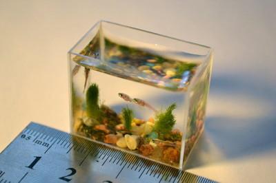 小さな魚たちが泳ぐ世界一小さな水槽、ロシアで作成 - GIGAZINE