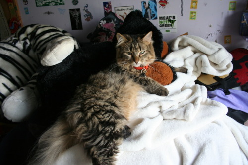 Takkun and a teddy bear from a few years ago.