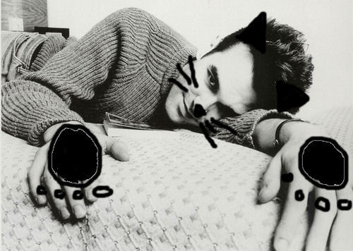 asacat:  this is morrissey as a cat