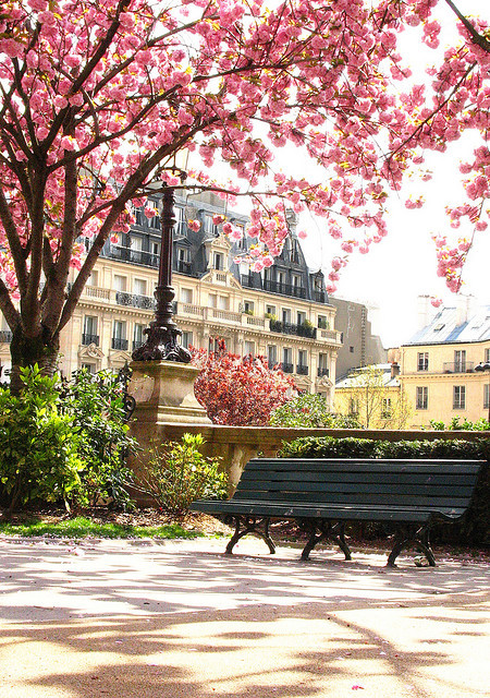 sunsurfer:  Cherry Blossom Park, Paris, France  photo via connie