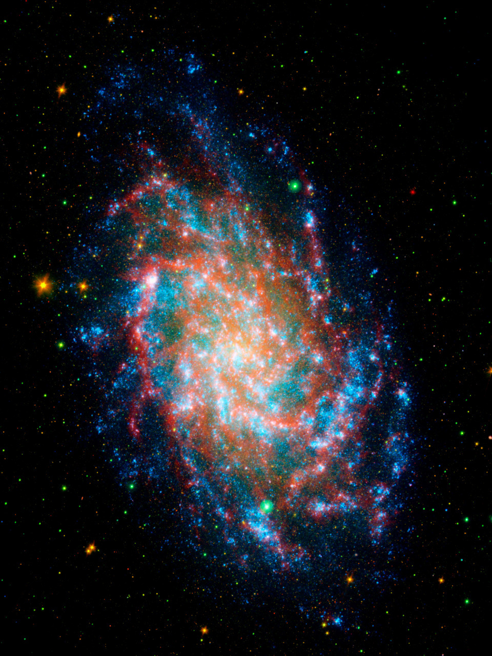 Multispectral Triangulum Galaxy Far-ultraviolet light from young stars glimmers blue, near-ultraviolet light from intermediate age stars glows green, near-infrared light from old stars burns yellow and orange, and dust rich in organic molecules burns red. The small blue flecks outside the spiral disk of M33 are most likely distant background galaxies. This image is a four-band composite that, in addition to the two ultraviolet bands, includes near infrared as yellow/orange and far infrared as red.