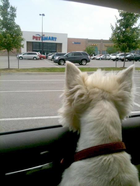 The PetSmart Holy Land (another awesome post submitted by: amberloveshaiti)