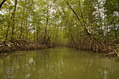 Went on a boat ride through a mangrove estuary today…gorgeous!