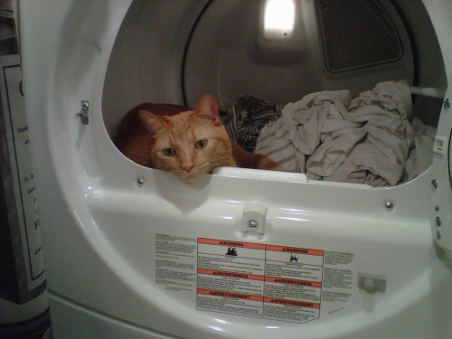 Get your fill of Frank sleeping in the dryer, he might find better things to do in the new house.