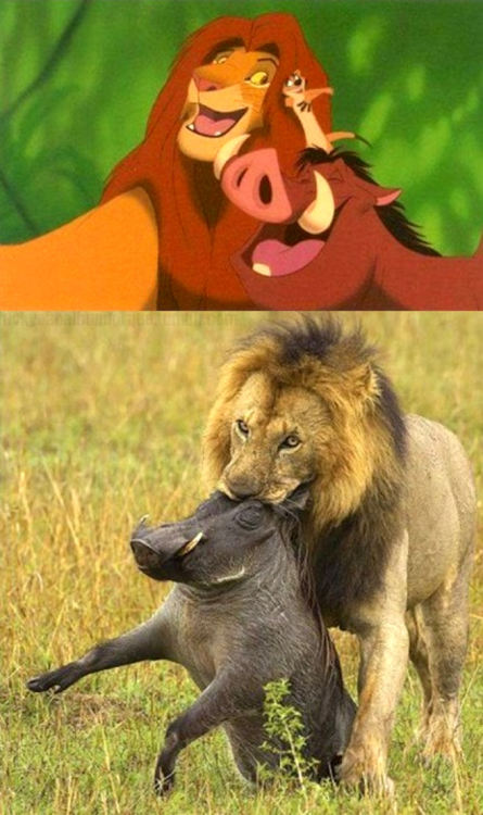 eli-banghart:  Lion King?  The Circle of Life: We'll be talking about the ones on the bottom tomorrow.