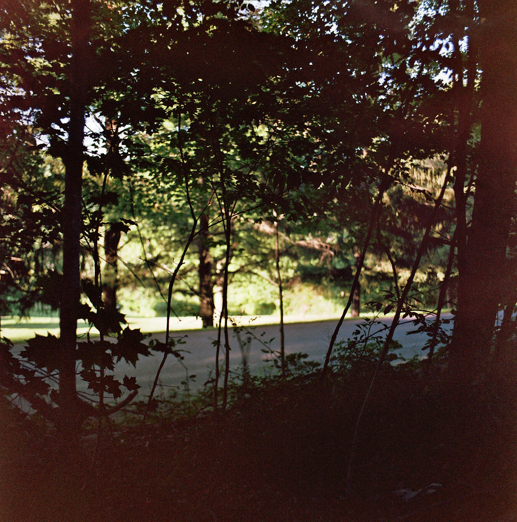 spent summer hiding in the trees ..kowa six + expired agfa <3