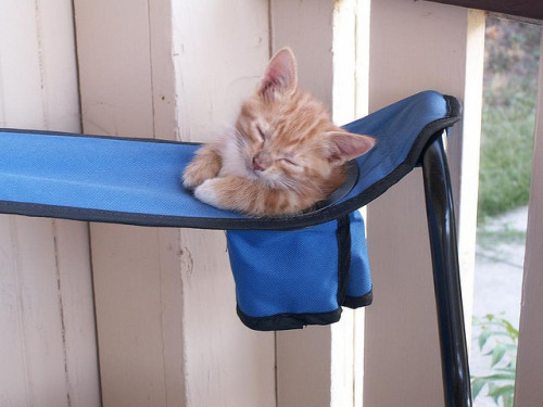 So, The Kitten Cup-holder exists.  The world (and kittens) can rest easy now. (via madebytess)