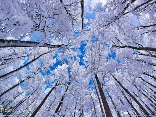 "supprosetry:  ""I wonder if the snow loves the trees and fields, that it kisses them so gently? And then it covers them up snug, you know, with a white quilt; and perhaps it says ""Go to sleep, darlings, till the summer comes again."" — Lewis Carroll, Alice's Adventures in Wonderland & Through the Looking-Glass"