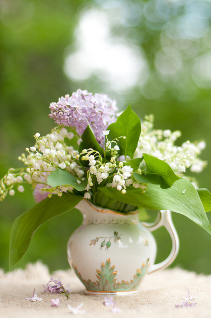 It's almost lilac season! Love the smell of the backyard during those few weeks