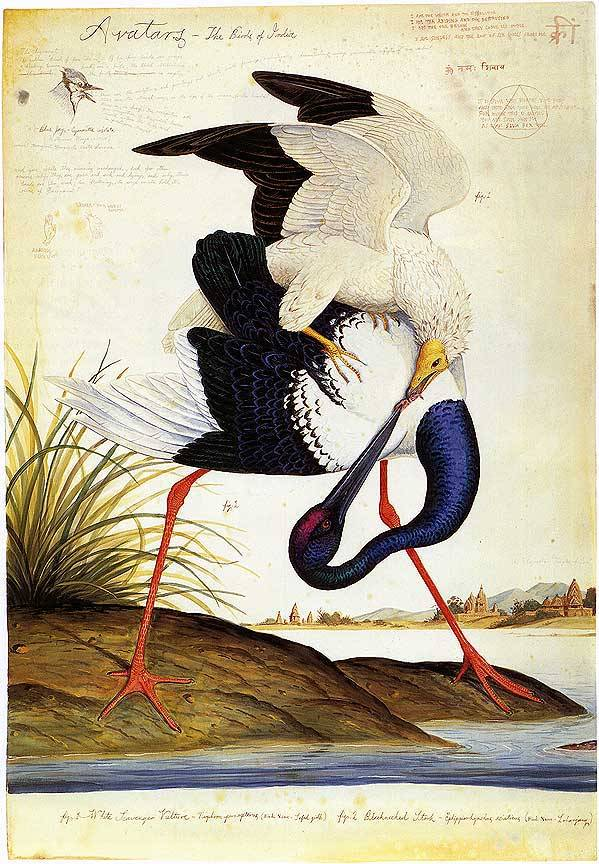 "thedukeofpeckhams:  Painting from ""Avatars - The Birds of India"" by Walton Ford"