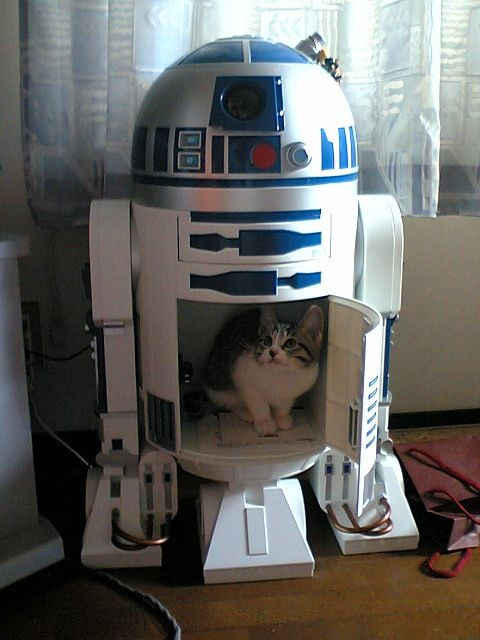 get out of there cat. you do not belong in r2d2 he is a droid not a cat carrier.