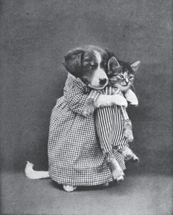 yeahiwasintheshit:  19th century internet imagery  Cuteeee