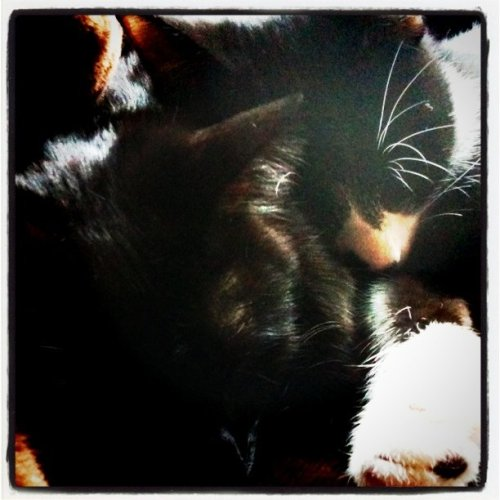 だいすき #CAT (Taken with instagram)