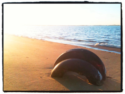 Tires buried in sand on Great South Bay, Fire Island. How did the tide do it??  Taken with iPhone.