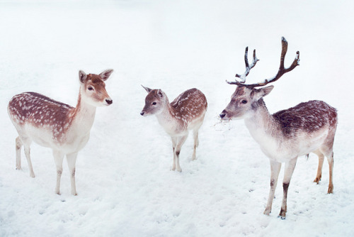 """Now Dasher! now, Dancer! now, Prancer and Vixen!On, Comet! On, Cupid! on, on Donner and Blitzen!To the top of the porch! to the top of the wall!Now dash away! Dash away! Dash away all!"""