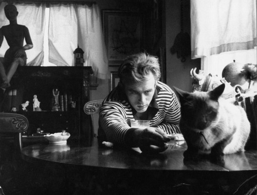 famouspplwithpets:  james dean and siamese that he got as a gift from elizabeth taylor
