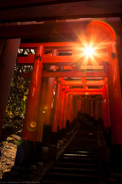 伏見稲荷大社の千本鳥居 (1000 Torii at Fushimi Inari Shrine) by ( Jason Weddington )