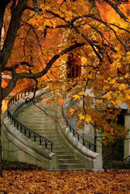 :: Stairway in Autumn :: ( Photo by Don )